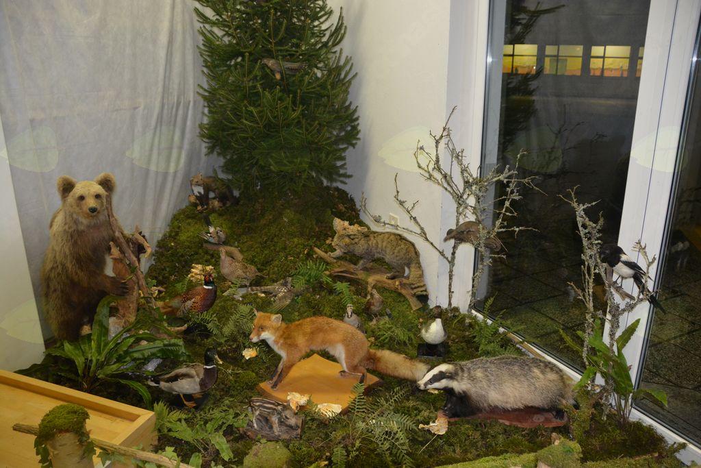 Poginule divje živali je potrebno varno odstraniti. Foto: Jan Križnič