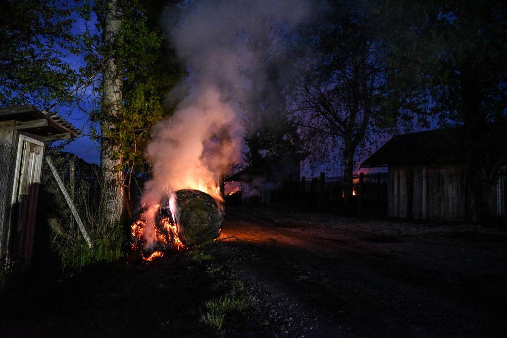 Kurjenje tesno ovitih bal v nasadih borovnic na ljubljanskem barju