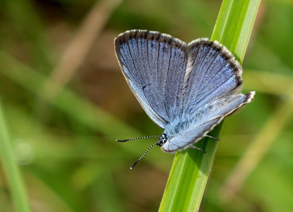 Predavanje o dnevnih metuljih Slovenije