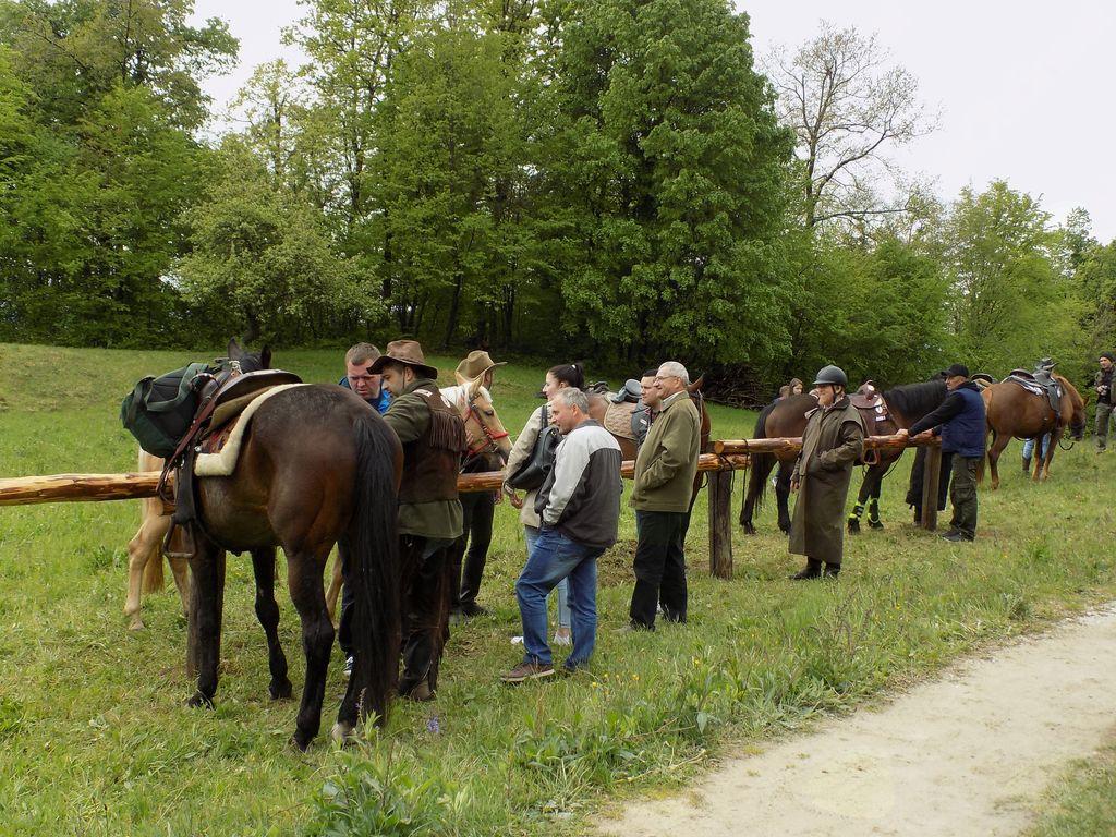 konji na privezih