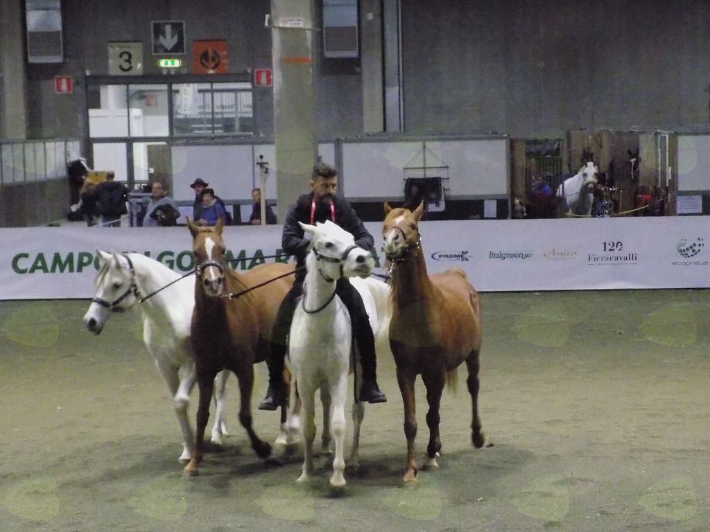 Prikaz jezdenja in ubogljivosti arabskega konja