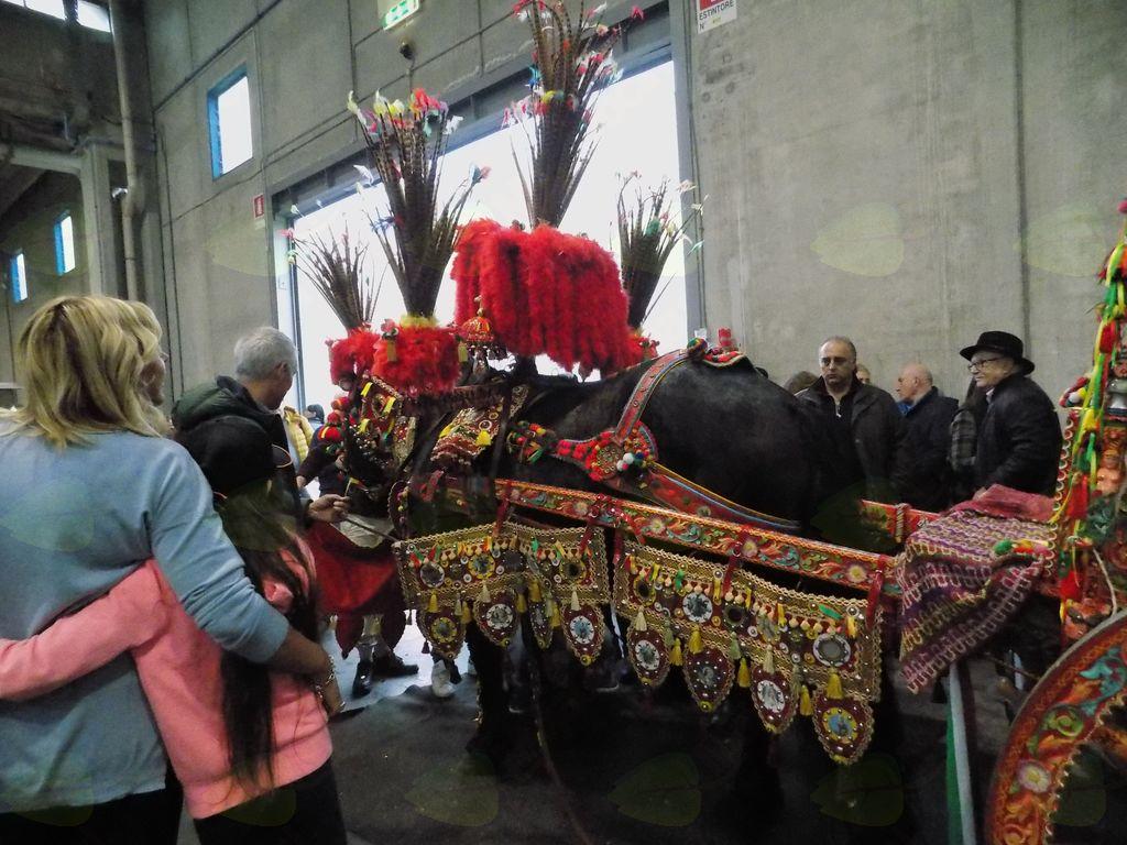 Opremljeni konj iz Sicilije