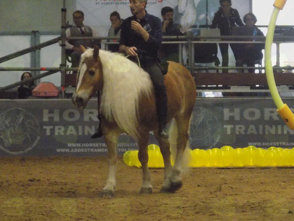 Prikaz jezdenja z navodili  iz konja
