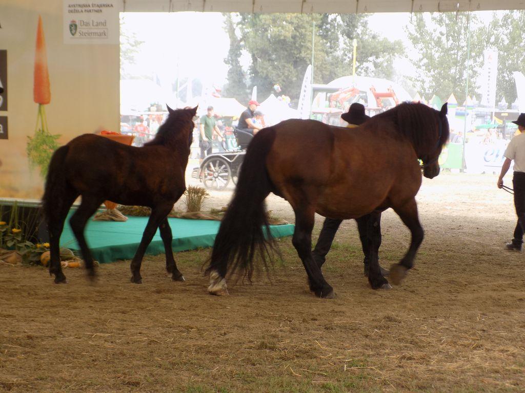 Predstavitev pasem konj
