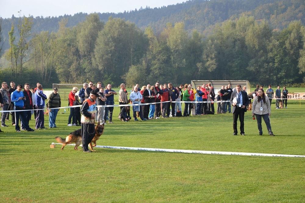 Najlepši nemški ovčarji