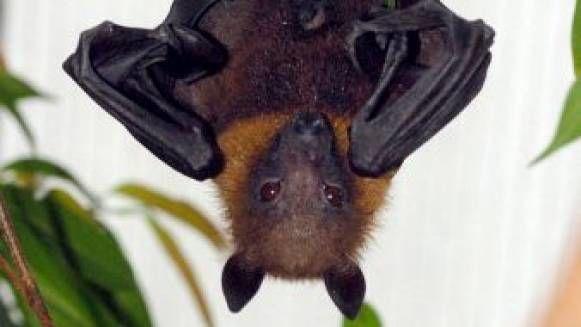 Prva razstava netopirjev na Slovenskem