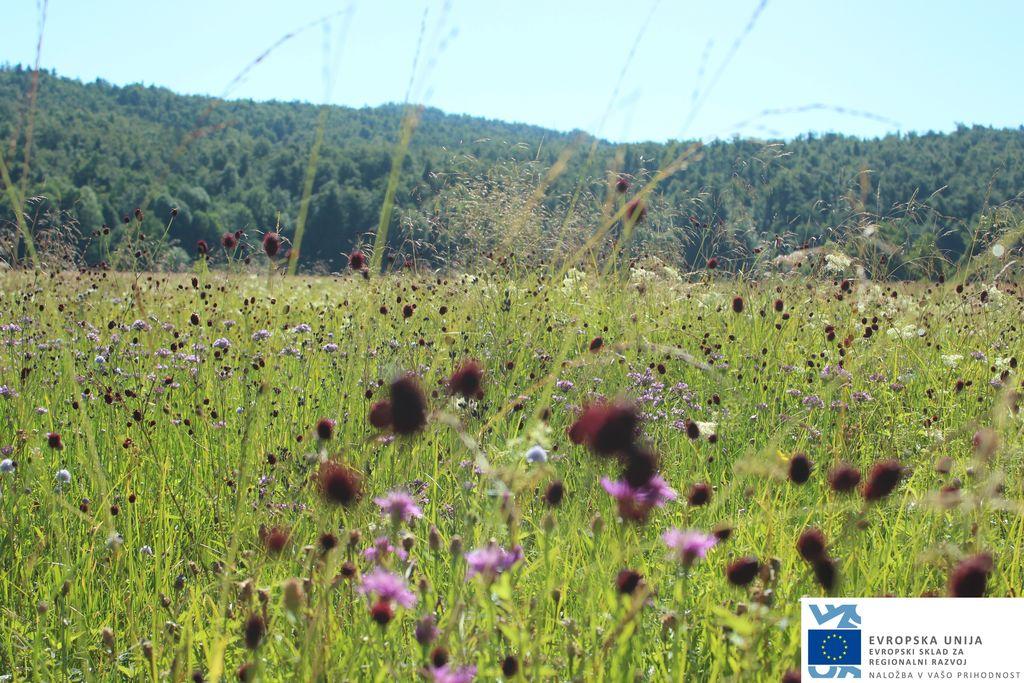 Cvetoč travnik pozno poleti
