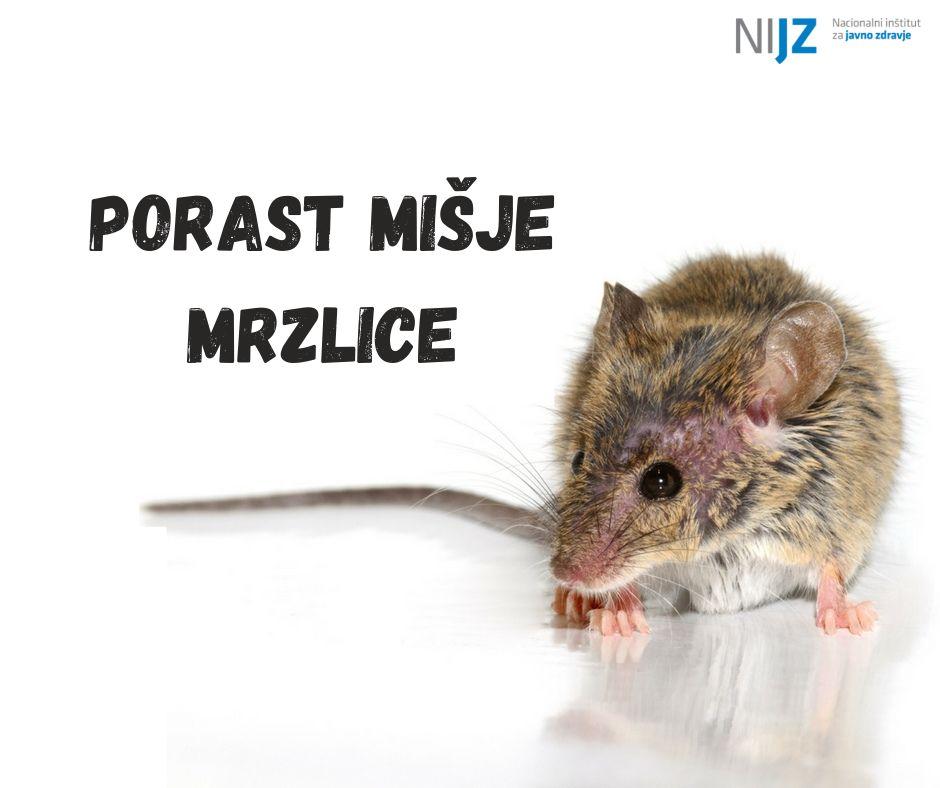Ob porastu primerov mišje mrzlice v Sloveniji so pomembni preventivni ukrepi