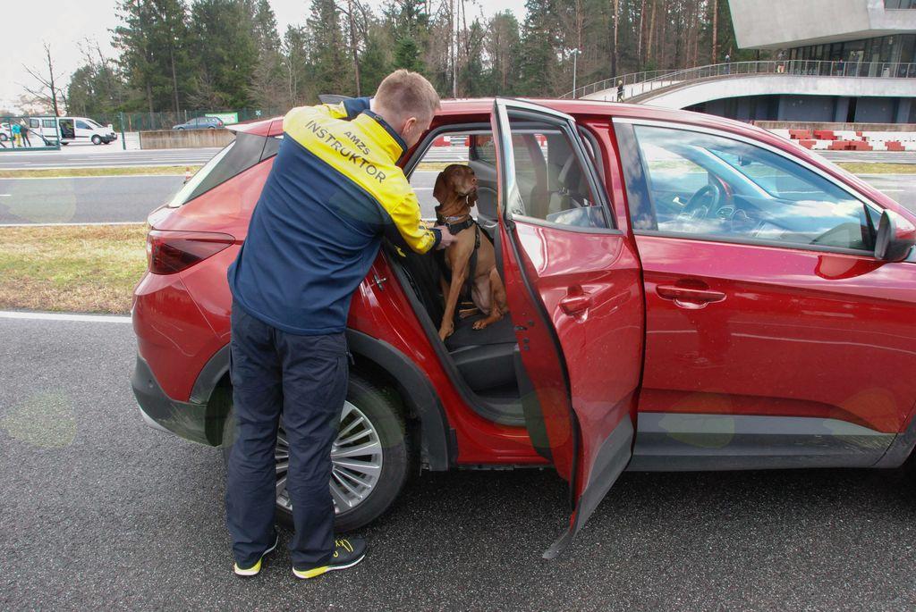 Pes mora biti v avtu v boksu ali pripet