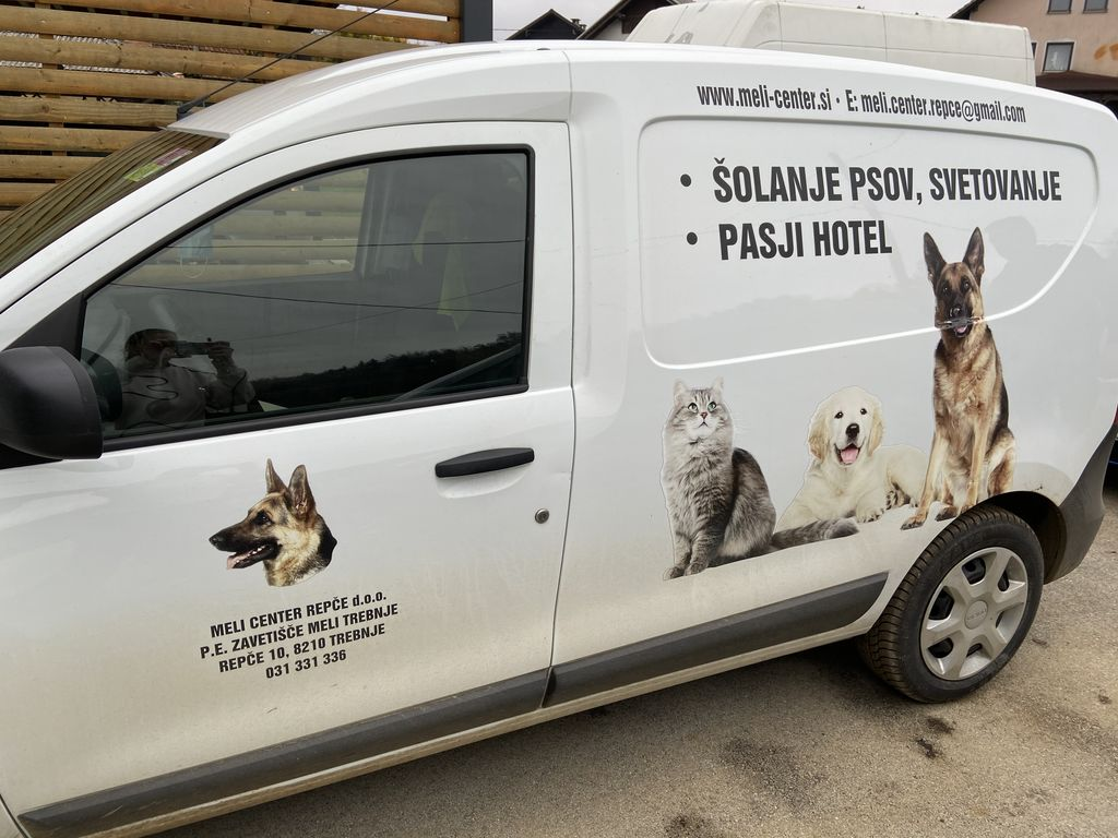 Podeljena koncesija za zapuščene mačke in pse