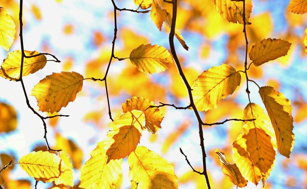 Oktober v Občini Rečica ob Savinji