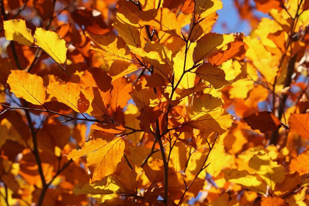 Utrinki s prireditve Pozdrav jeseni
