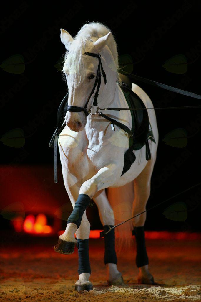 Nova predstava v kobilarni Lipica