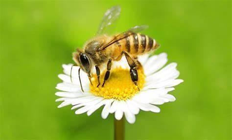 Ustvarjalna čebelarska delavnica