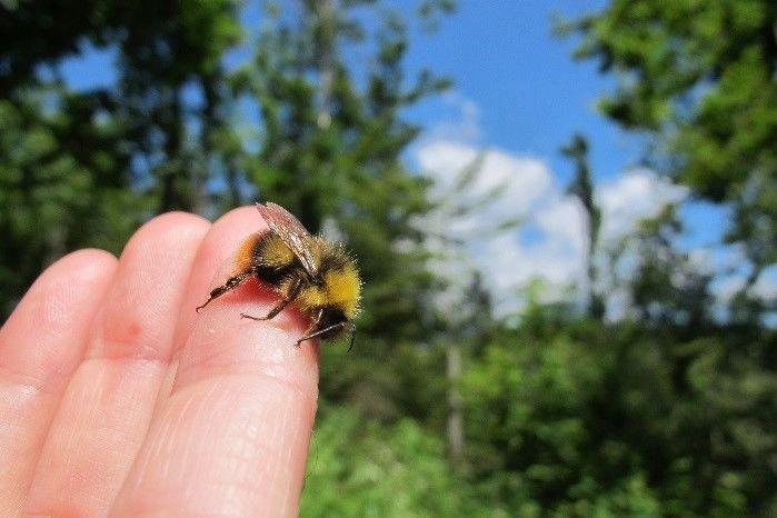 Prepoved premika čebelnjakov oz. čebeljih družin na določenih območjih