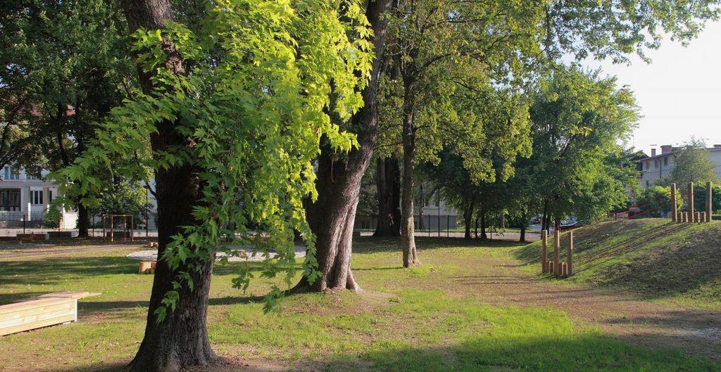 V Ljubljani skrbimo za mestno drevje Foto: B. Jakše