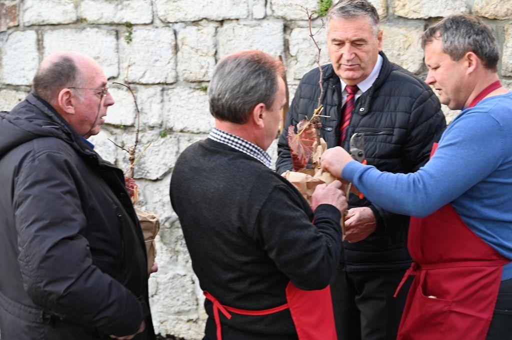 Potomka najstarejše vinske trte v mestnem jedru