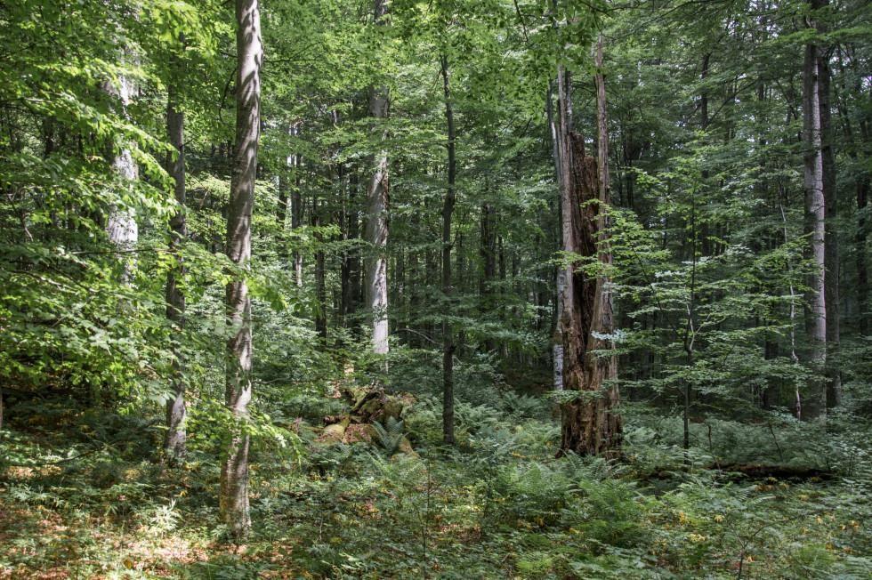 Teden gozdov: kaj so gozdni in pragozdni rezervati?
