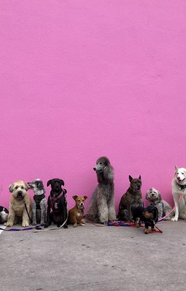 Cepljenje psov proti steklini