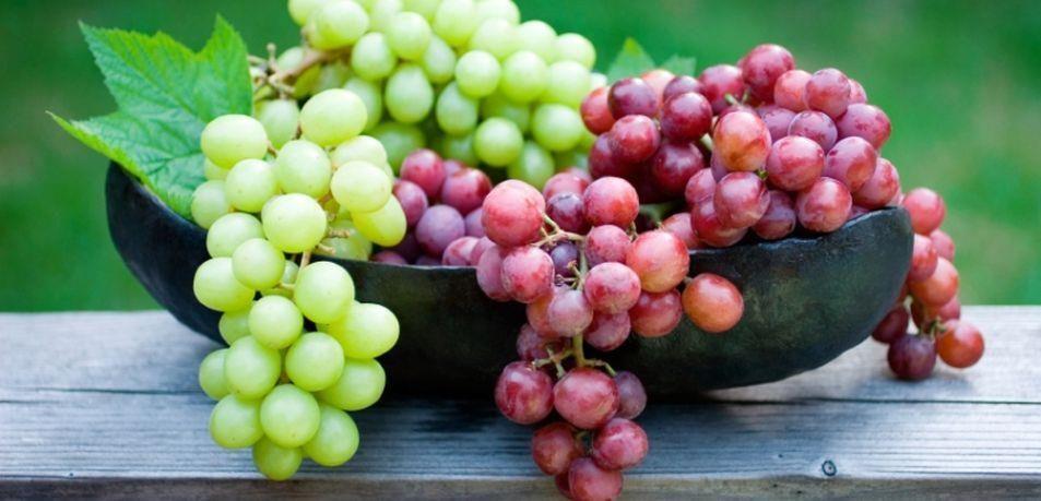 Obvestilo vinogradnikom – prijava zalog vina