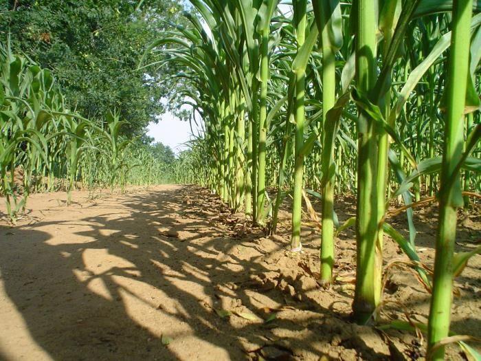 Pogosta vprašanja in odgovori v času epidemije COVID-19 s področja kmetijstva