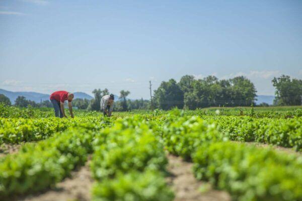 Razpis za razvoj kmetijstva in podeželja v občini Mozirje
