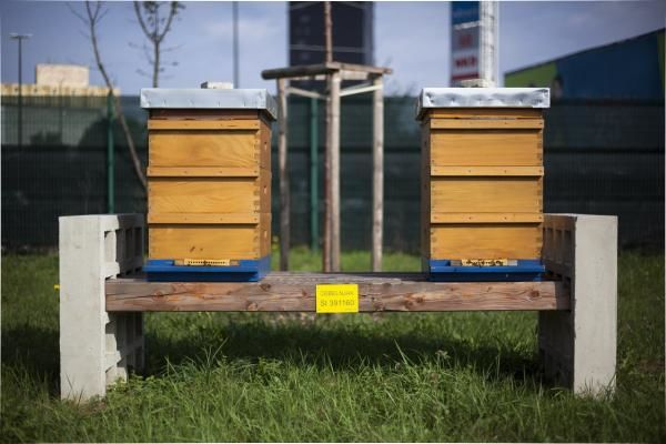 Ljubljanska čebelja družina se širi
