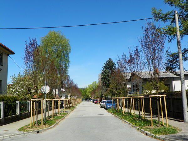 Nov drevored na Zbašnikovi ulici.