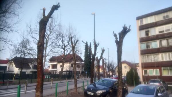 """Ljubljana tudi za leto 2020 prejela priznanje """"svetovno mesto dreves"""""""