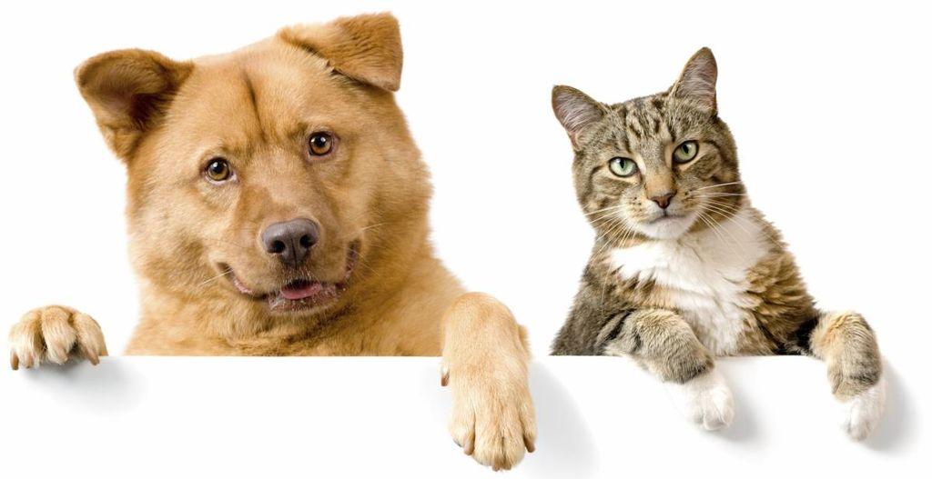 JAVNI RAZPIS za subvencioniranje stroškov kastracije in sterilizacije lastniških mačk in psov