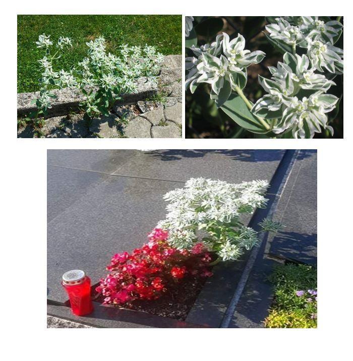 Odstranite strupene rastline!