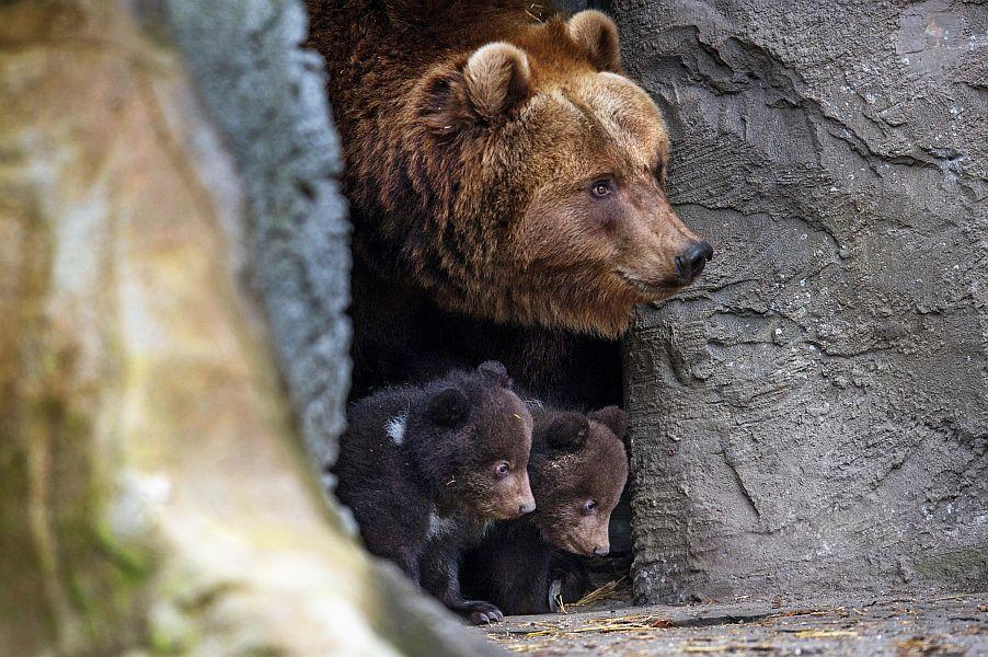 Medvedji brlogi na Krimsko Mokrškem pogorju