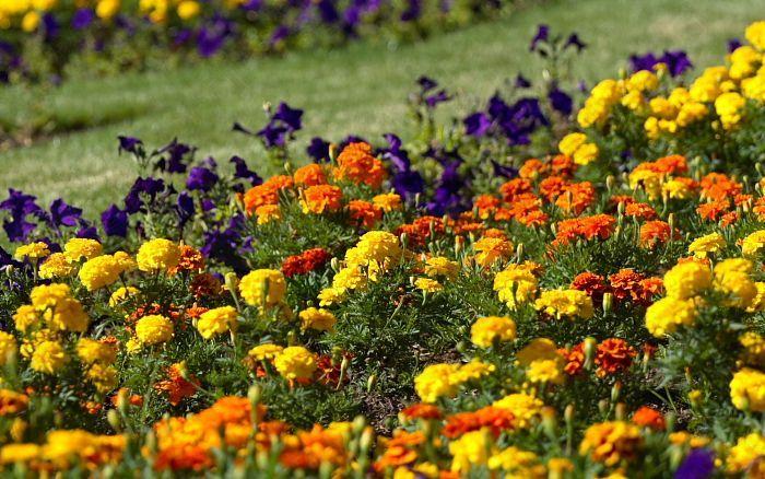 Vrtna opravila v juniju