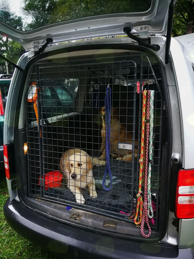 Mednarodna pasja razstava v Polhovem Gradcu