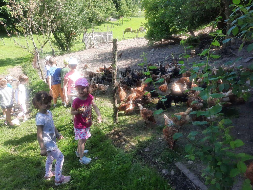 Hranjenje kokoši