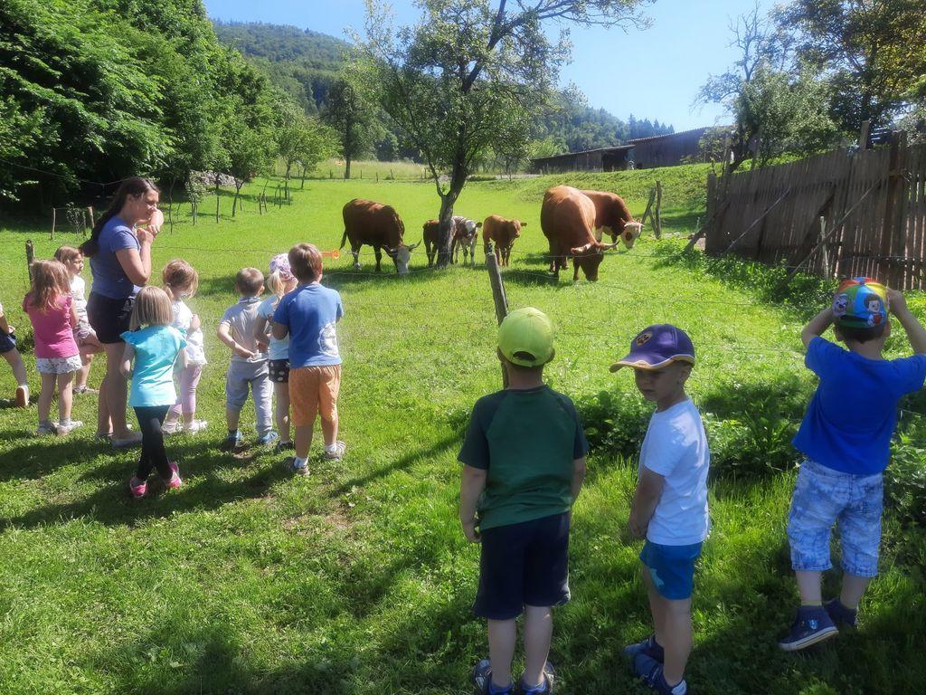 Opazovanje krav in teličkov