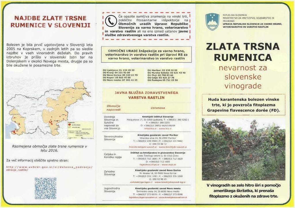 Obvestilo o obveznem zatiranju ameriškega škržatka zaradi preprečevanja širjenja zlate trsne rumenice