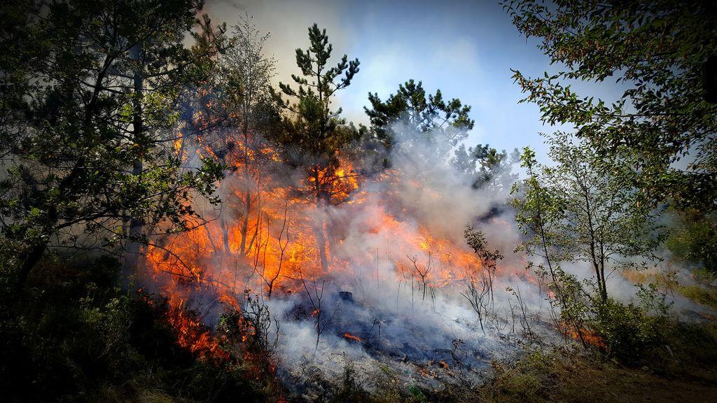 Razglašena velika požarna ogroženost naravnega okolja