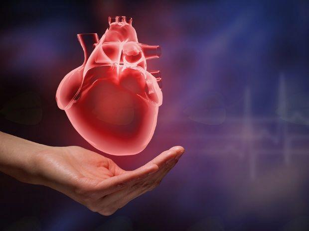 Koencim Q10 je navzoč v membrani skoraj vseh celic človeškega telesa.
