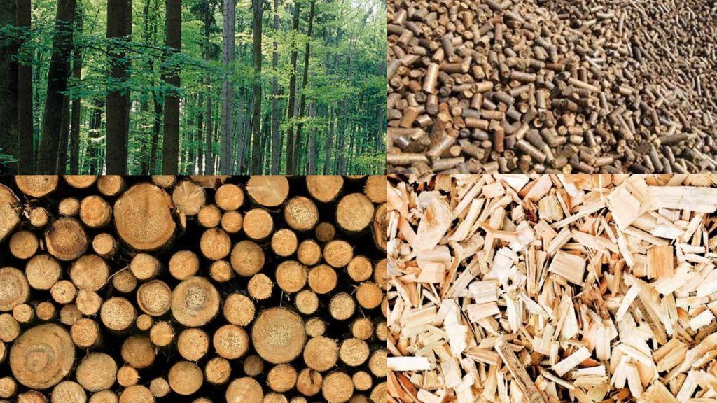 Les je trajnosten energetski vir lokalnega izvora.