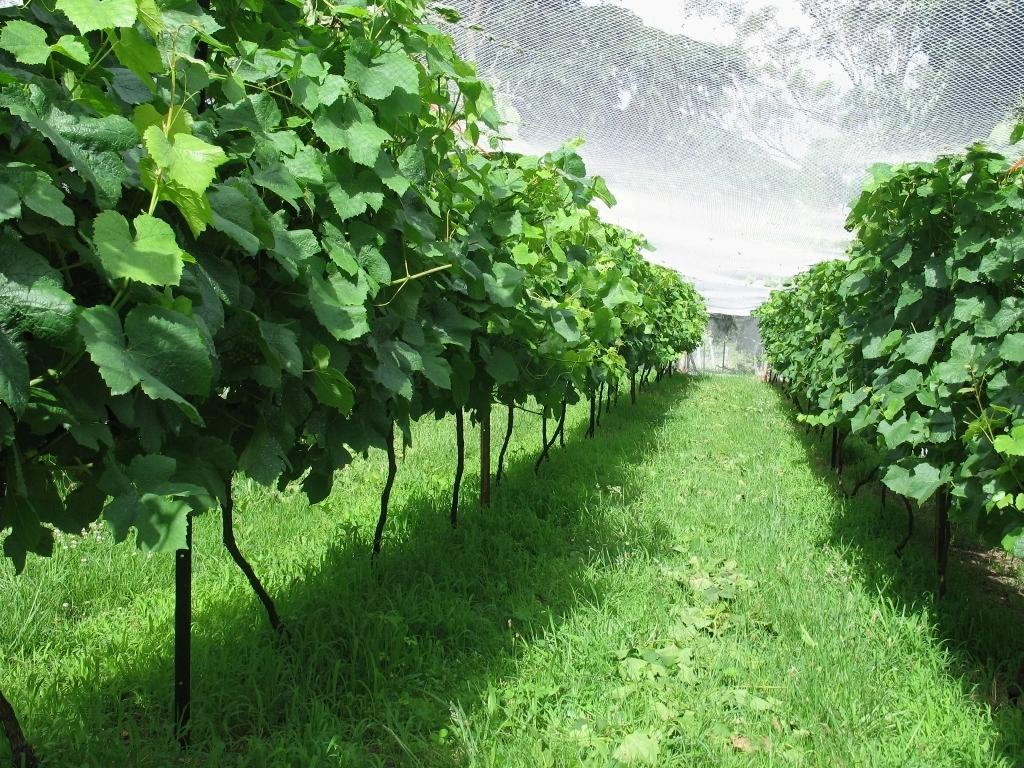 Eurogardnovi vrtni nasveti za mesec september