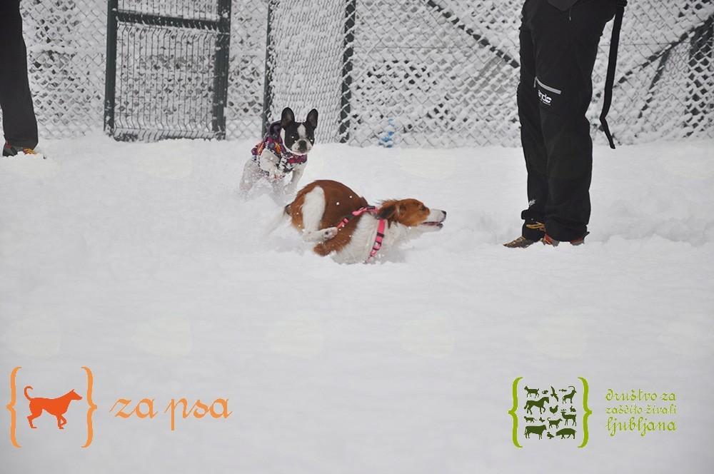 NVO s potencialom je tudi Društvo za zaščito živali Ljubljana