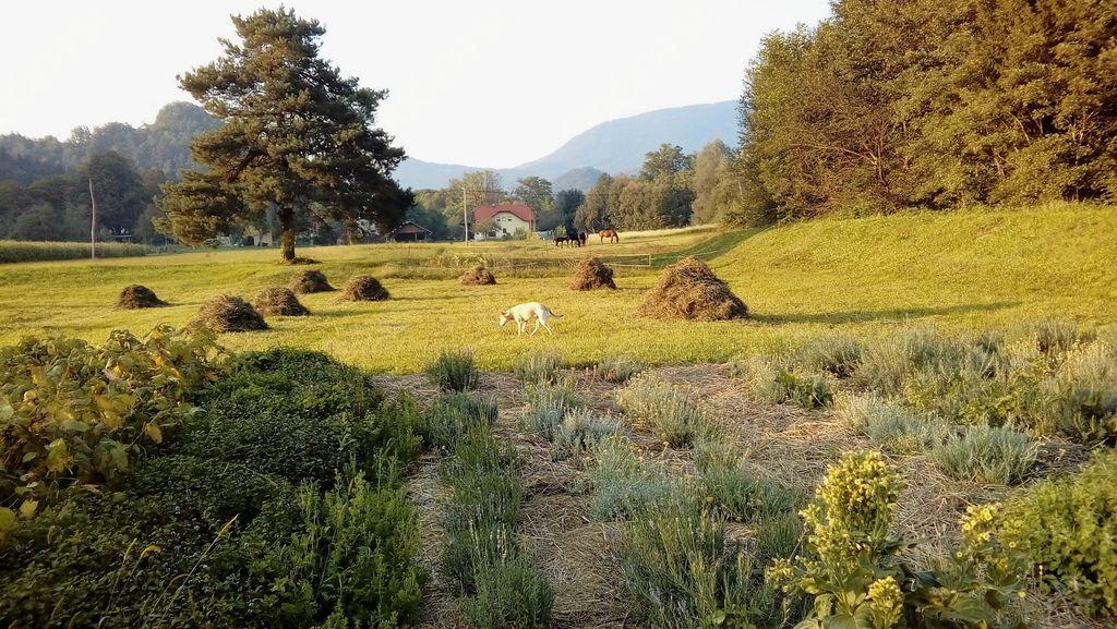 Ekološko kmetovanje je lahko tudi priložnost in eden od nadaljnjih razvojnih ciljev vaše kmetije