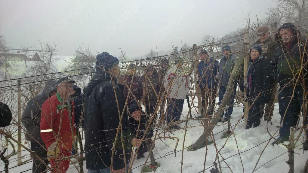 Vojniški vinogradniki se izobražujemo: zimska rez