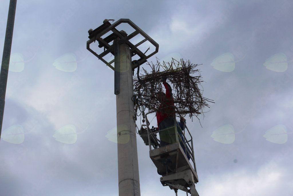 Štorkljino gnezdo v Arclinu čaka na ptice