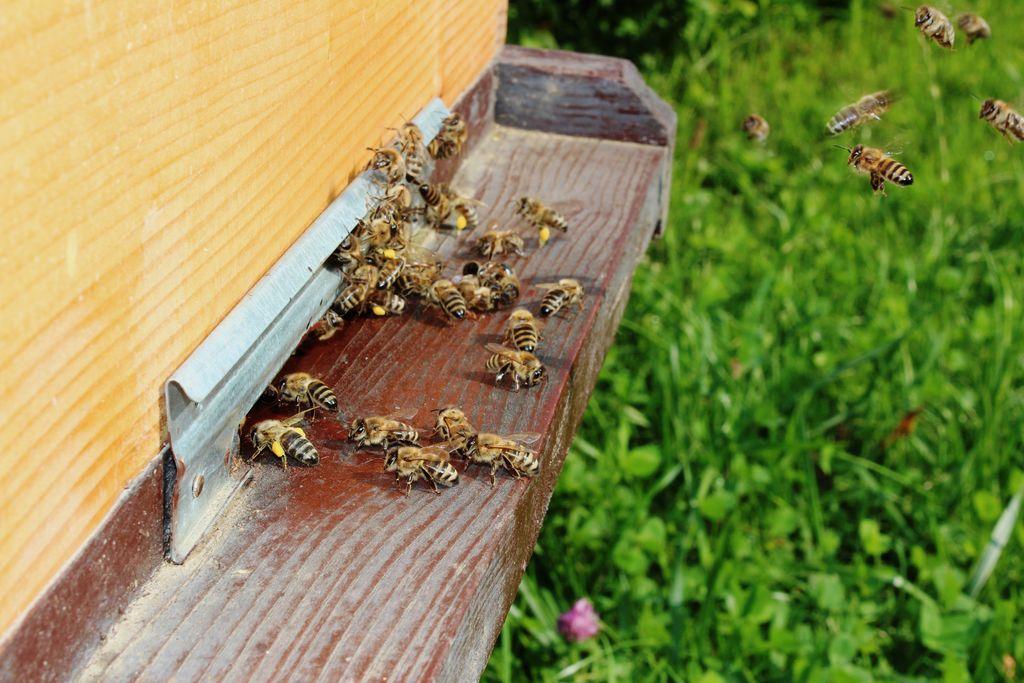 Povabilo na izobraževanje za čebelarskega turističnega vodnika