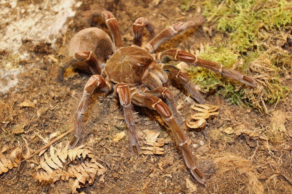 Razstava največjih pajkov in škorpijonov na svetu