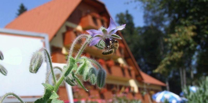 Povabilo na II. Festival čebelarske pesmi – Lukovica 2017