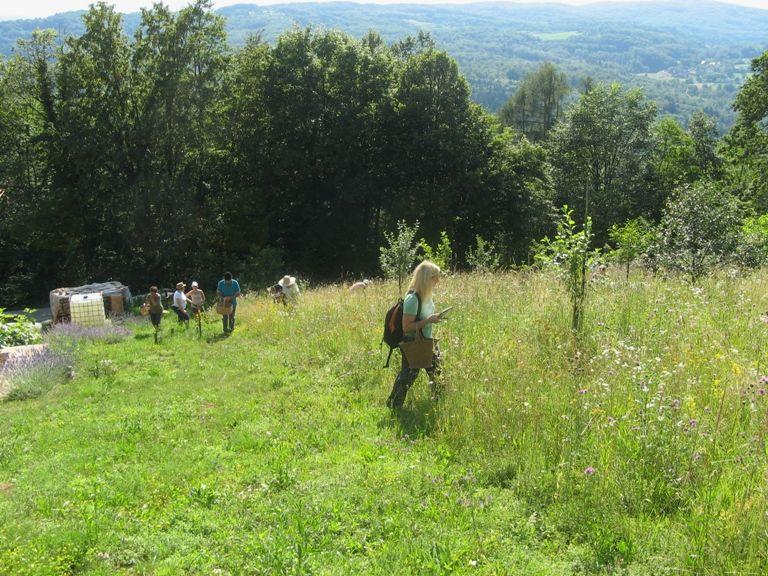 Nabiranje zelišč na LISCU z ga Jožico Bajc Pivec