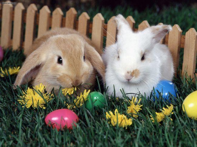 Iskanje izgubljenega velikonočnega zajčka
